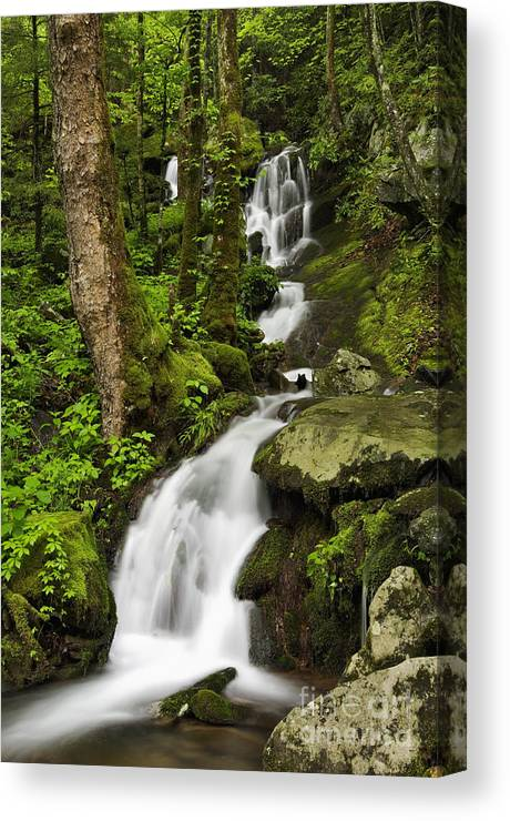 Water Canvas Print featuring the photograph Smoky Mountain Cascade - D002388 by Daniel Dempster