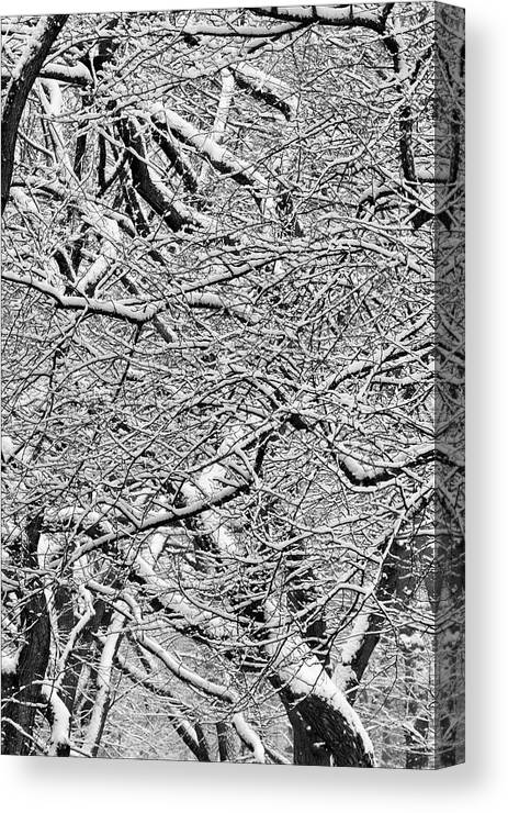 Snow Canvas Print featuring the photograph Snow And Trees by Robert Ullmann