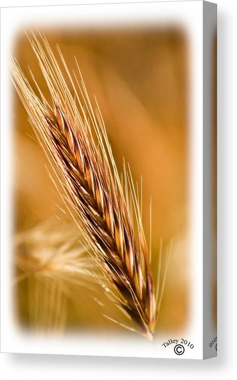 Flowers Canvas Print featuring the photograph Spring Time Brown by Ronald Talley