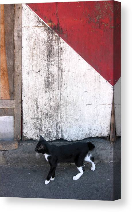Photographer Canvas Print featuring the photograph Street Cat by Jez C Self