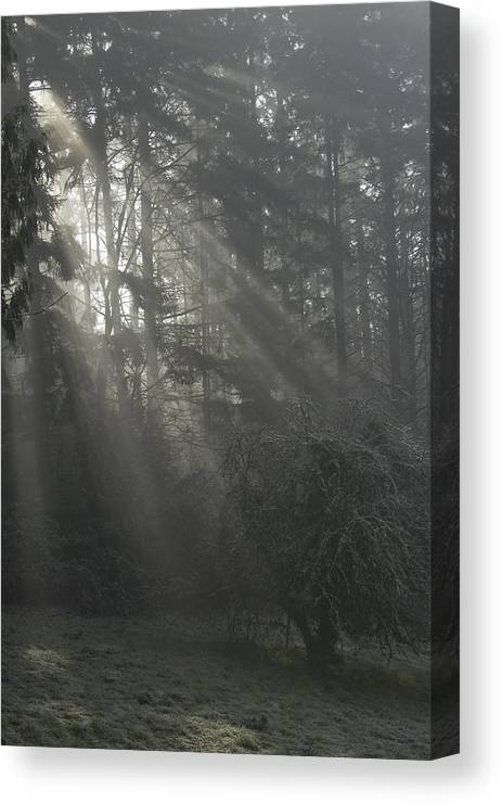 Fog; Foggy Scene; Forest Light; Frost; Light Rays; Rays; Sunbeams; Surreal; Trees & Light; Vertical Canvas Print featuring the photograph Sun Rays Through The Trees On A Foggy Winter Day by John Higby