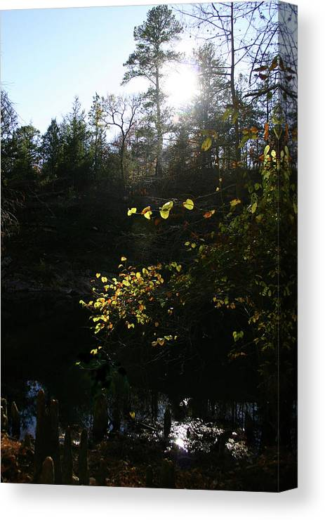 Gold Canvas Print featuring the photograph Sunlight At The River by Nina Fosdick