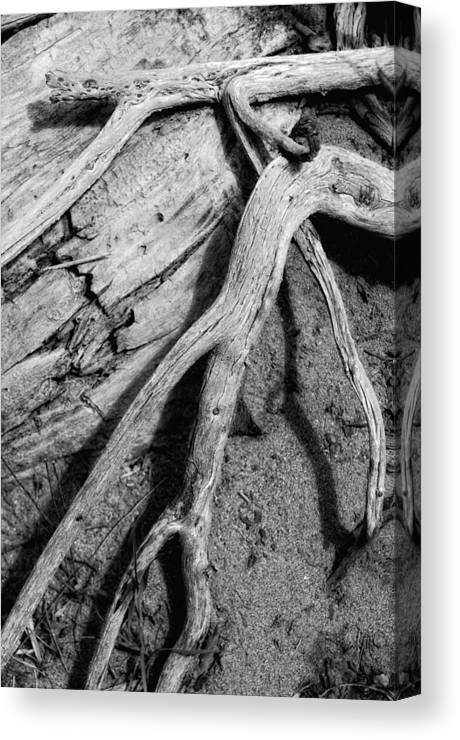 Wood Canvas Print featuring the photograph Tender Death by Donna Blackhall