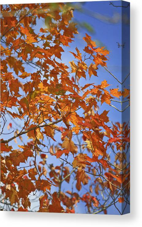 Fall Canvas Print featuring the photograph The Color Of Fall 2 by Teresa Mucha