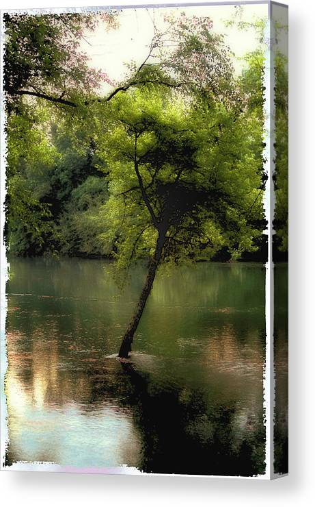 Tree Canvas Print featuring the photograph The Tree Island by Ken Gimmi