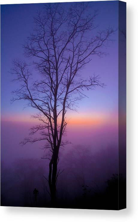 Landscape Canvas Print featuring the photograph Tree Portrait by Itai Minovitz