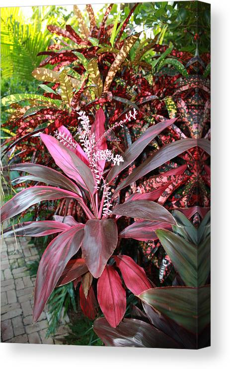 Floral Canvas Print featuring the photograph Tropic Walk by Jim Derks