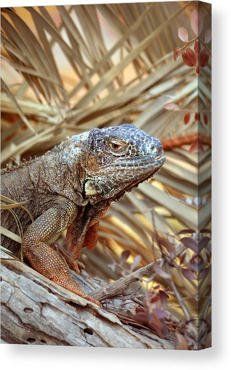 Lizard Canvas Print featuring the photograph Unexpected Observer by Gaile Griffin Peers