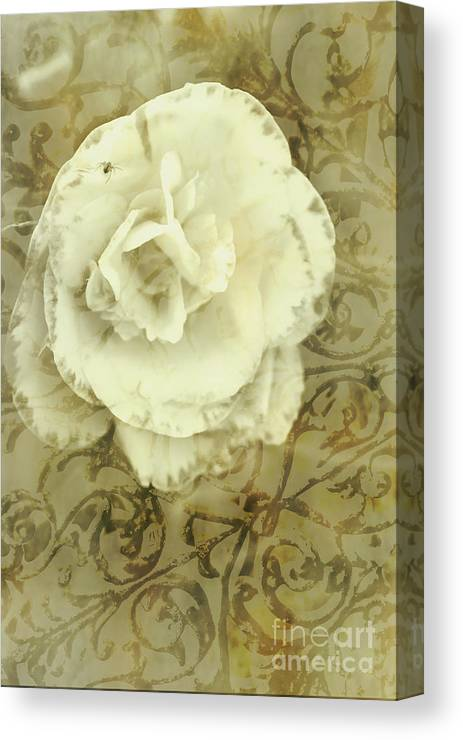 Vintage White Flower Art Canvas Print