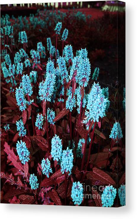 Canvas Print featuring the photograph Violet Dream by Jamie Lynn