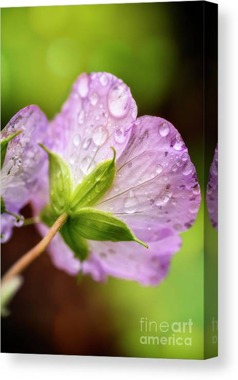 Kg Photography Canvas Print featuring the photograph Wild Geranium After The Rain by KG Photography