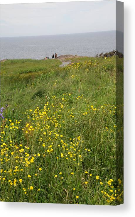 Cape Spear Canvas Print featuring the photograph Wildflowers At Cape Spear by Terese Loeb Kreuzer