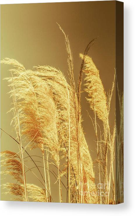 Dry Canvas Print featuring the photograph Windswept Autumn Brush Grass by Jorgo Photography - Wall Art Gallery