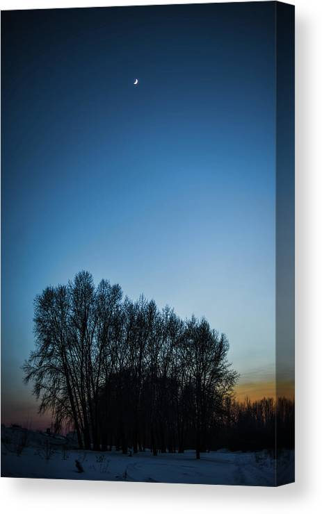 Background Canvas Print featuring the photograph Winter Trees On The Background Of The Night Sky by Oleg Yermolov