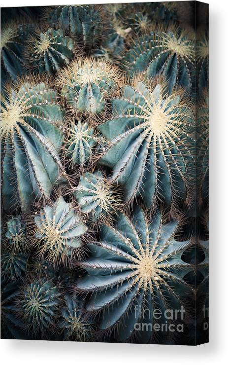 Small Canvas Print featuring the photograph Rustic Macro Shot Of Cactus - Tropical 1 by Naturephotography