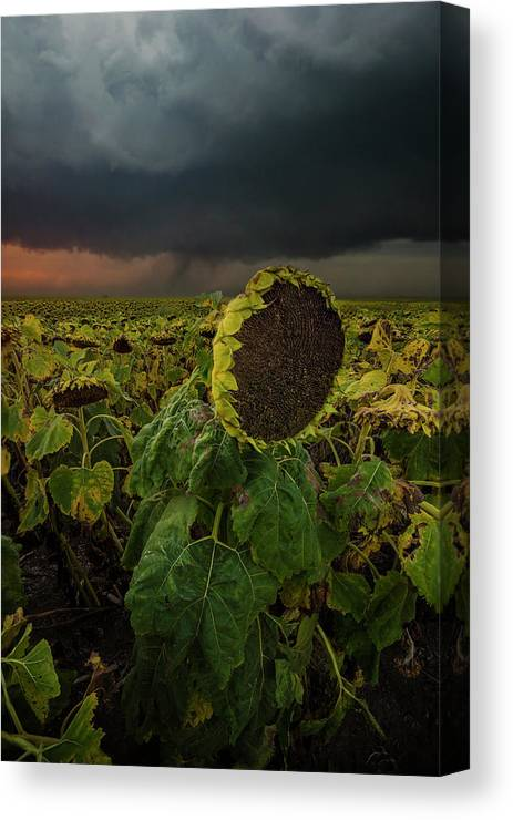 Tornado Canvas Print featuring the photograph Twisted by Aaron J Groen