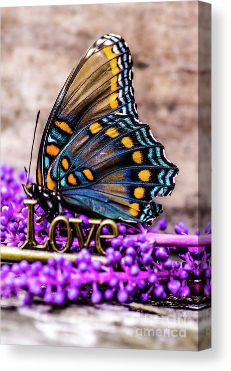Love Canvas Print featuring the photograph A Love Butterfly by Gerald Kloss