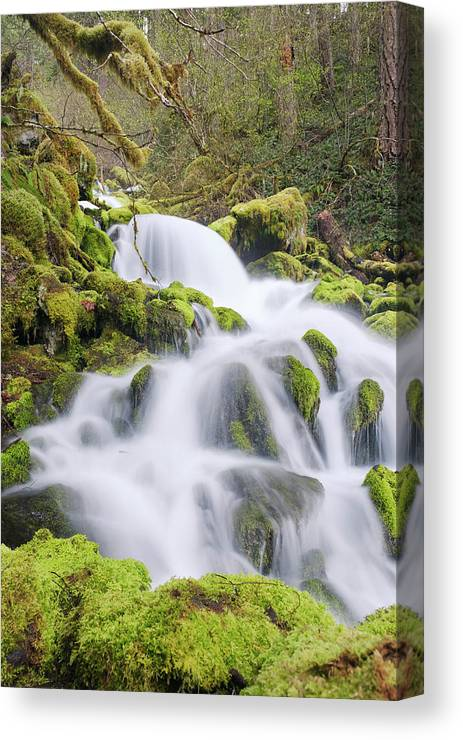 Moss Canvas Print featuring the photograph Mossy Falls by Nicole Young