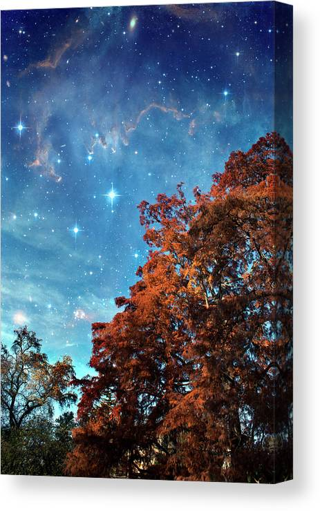 Scenics Canvas Print featuring the photograph Nebula Treescape by Paul Grand Image