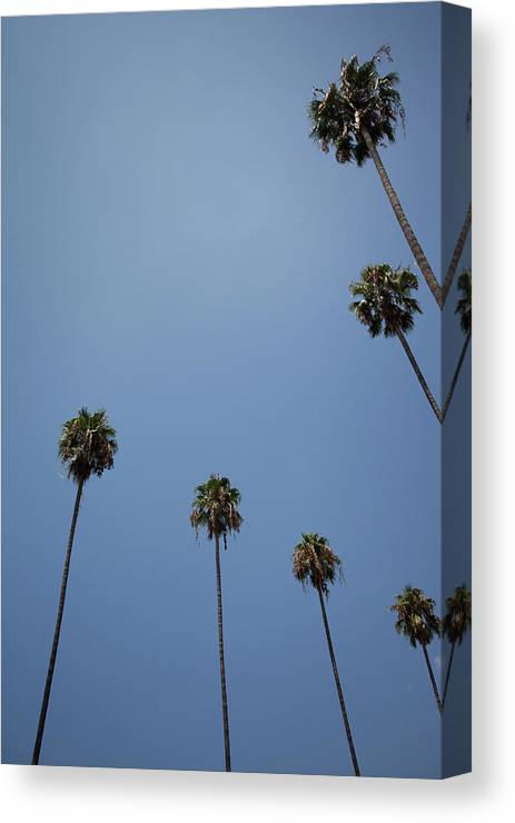 Tranquility Canvas Print featuring the photograph Palm Trees by Tuan Tran