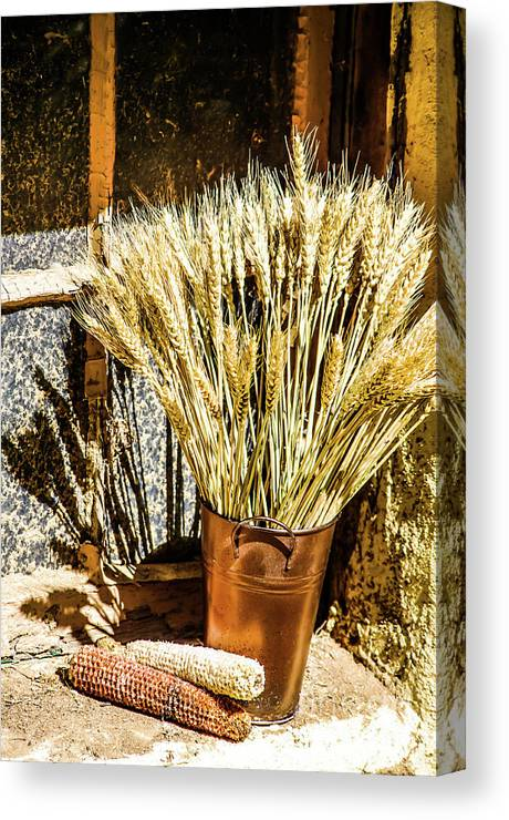 Wheat Canvas Print featuring the photograph Wheat Tine by Gerald Kloss
