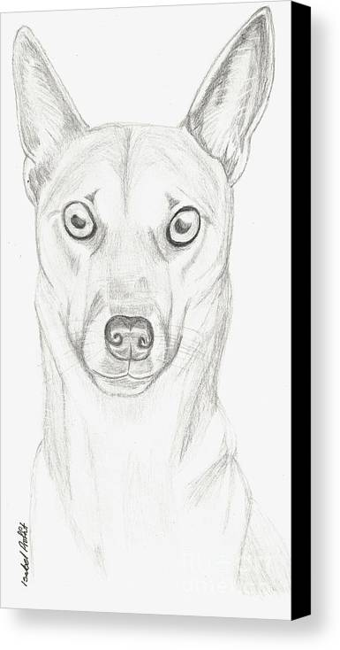 Dog Canvas Print featuring the drawing Alfie by Isabel Proffit