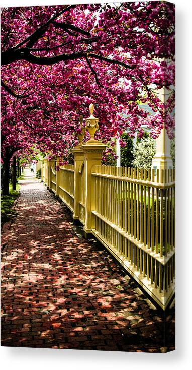 Salem Canvas Print featuring the photograph Salem Walkway Shrouded By Spring Flowers by Jeff Folger