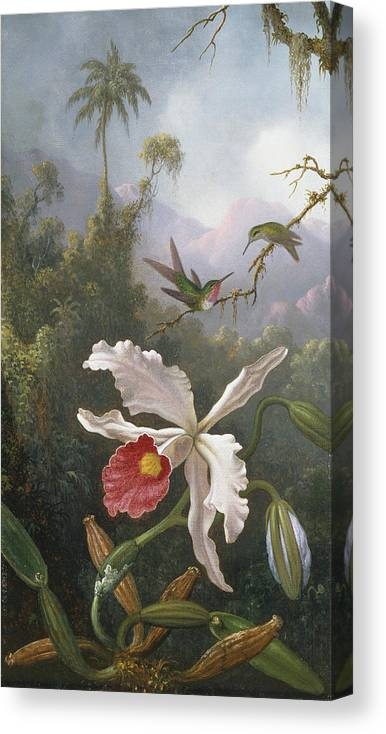Martin Canvas Print featuring the painting Two Hummingbirds Above A White Orchid by Martin Johnson Heade