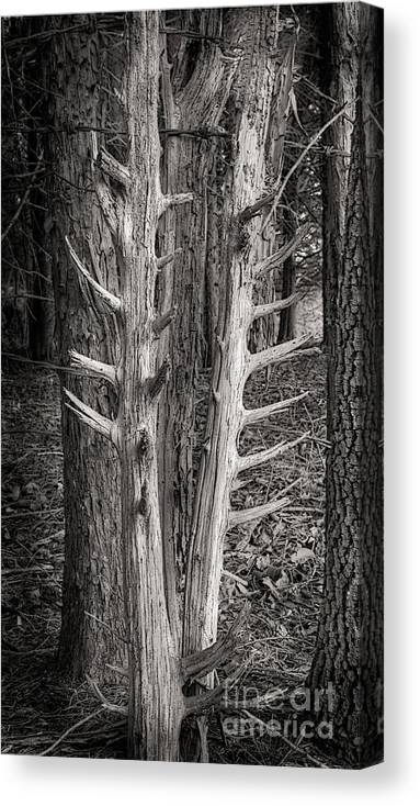 Scotopic Canvas Print featuring the photograph Scotopic Vision 4 - Trees by Pete Hellmann