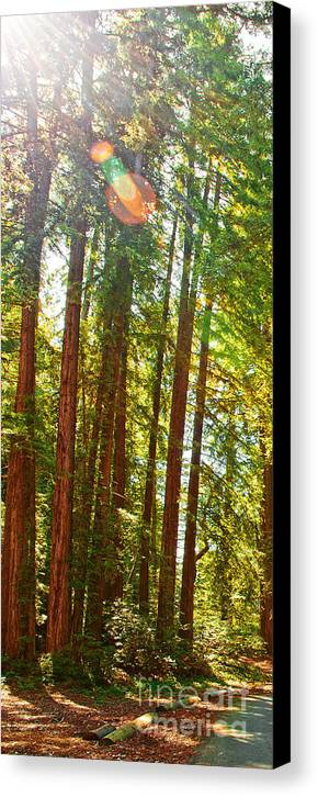 Redwoods Canvas Print featuring the photograph Redwood Wall Mural Panel 1 by Artist and Photographer Laura Wrede