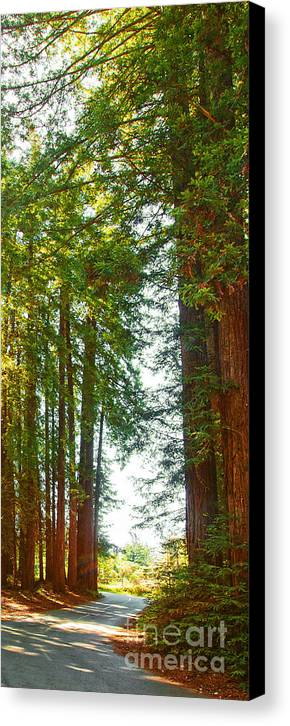 Redwoods Canvas Print featuring the photograph Redwood Wall Mural Panel 2 by Artist and Photographer Laura Wrede