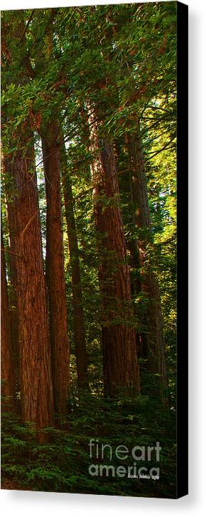 Redwoods Canvas Print featuring the photograph Redwood Wall Mural Panel Three by Artist and Photographer Laura Wrede