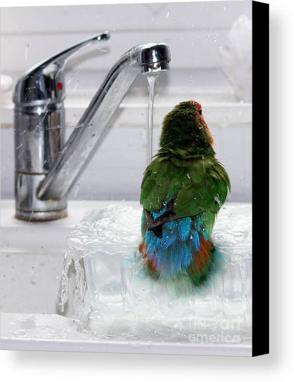 Bird Canvas Print featuring the photograph The Lovebird's Shower by Terri Waters