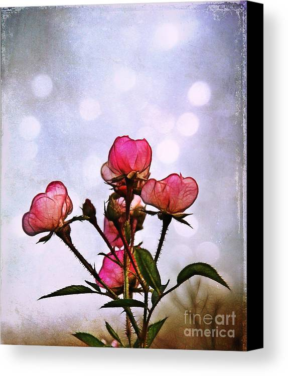 Rose Canvas Print featuring the photograph Reaching For The Light by Judi Bagwell