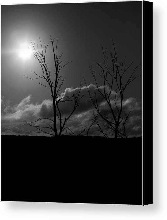 Tree Canvas Print featuring the photograph Reach For The Sun by Nigel Jones