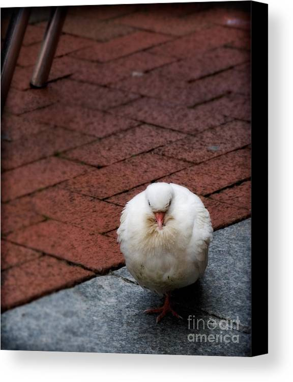 Bird Canvas Print featuring the photograph Angel Of The City by Jay Taylor
