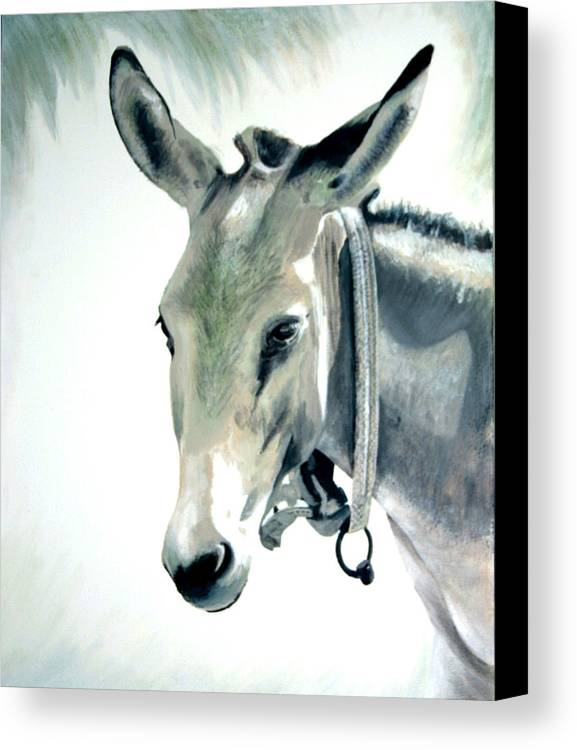 Donkey Canvas Print featuring the painting Donkey by Fiona Jack