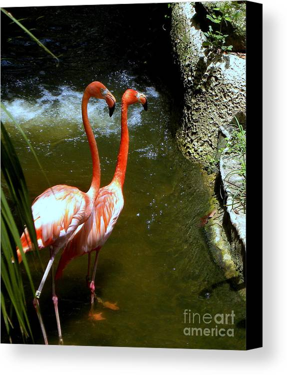 Flamingo Canvas Print featuring the photograph Flamingo Pair by Terri Mills