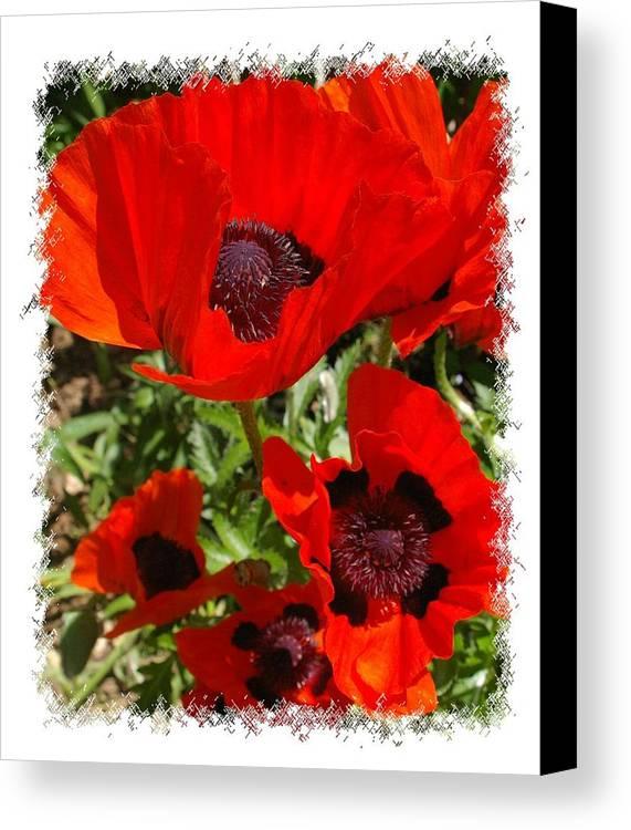 Garden Canvas Print featuring the photograph Ladybird Poppy by Veron Miller