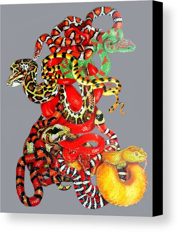 Reptile Canvas Print featuring the drawing Slither by Barbara Keith