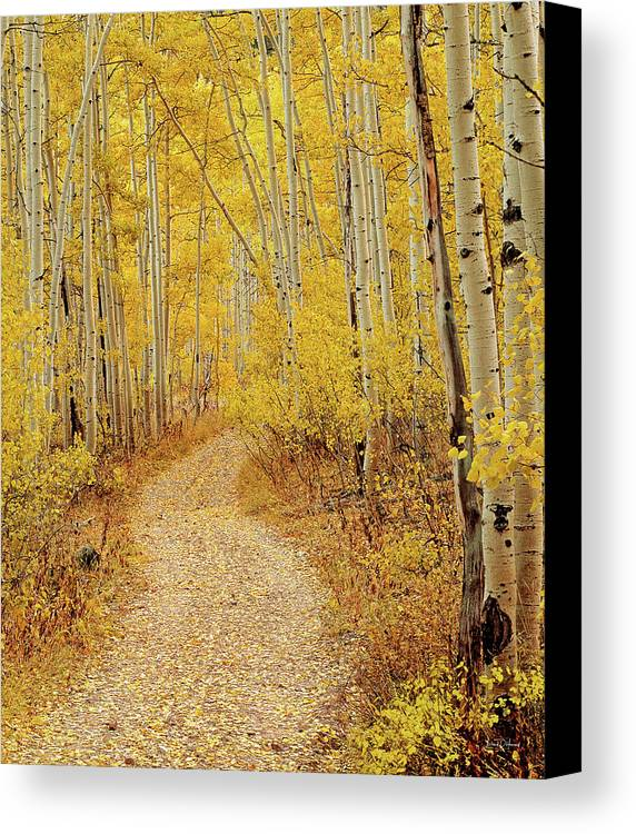 Autumn Canvas Print featuring the photograph Autumn Road by Leland D Howard