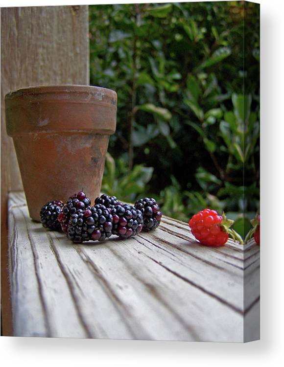 Blackberries Canvas Print featuring the photograph Never Did Fit In And That's Ok by Rheann Earnest