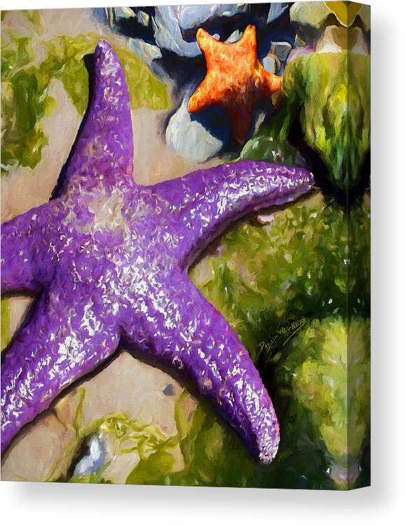 Sea Stars Canvas Print featuring the painting Sea Stars by David Wagner