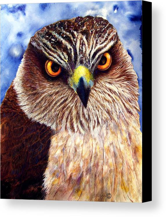 Wild Hawk Canvas Print featuring the painting Hawkeyes by JoLyn Holladay