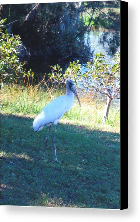 Lakes Park Canvas Print featuring the photograph Wood Stork by Robert Floyd
