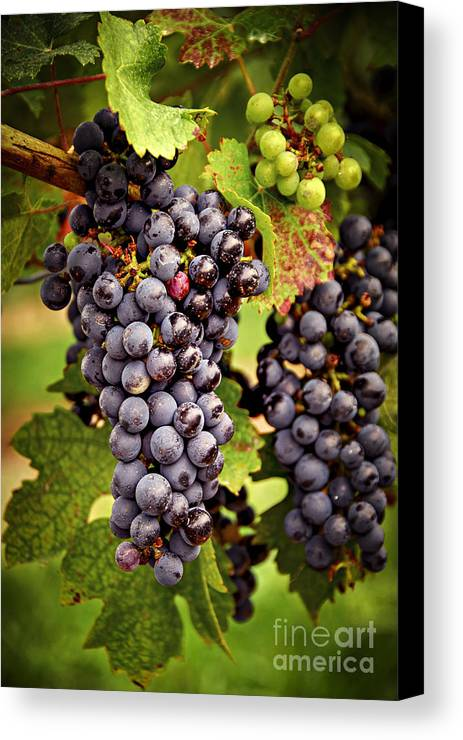 Grape Canvas Print featuring the photograph Red Grapes by Elena Elisseeva