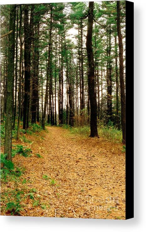 Autumn Canvas Print featuring the photograph Autumn Walk by Raymond Earley