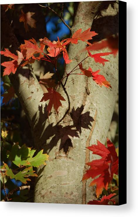 Autumn Canvas Print featuring the photograph Carolina Autumn by Suzanne Gaff