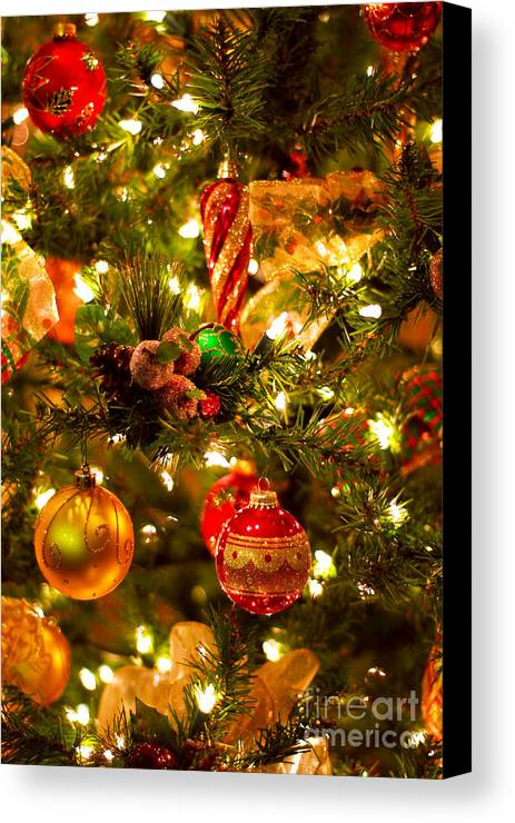 Christmas Canvas Print featuring the photograph Christmas Tree Background by Elena Elisseeva