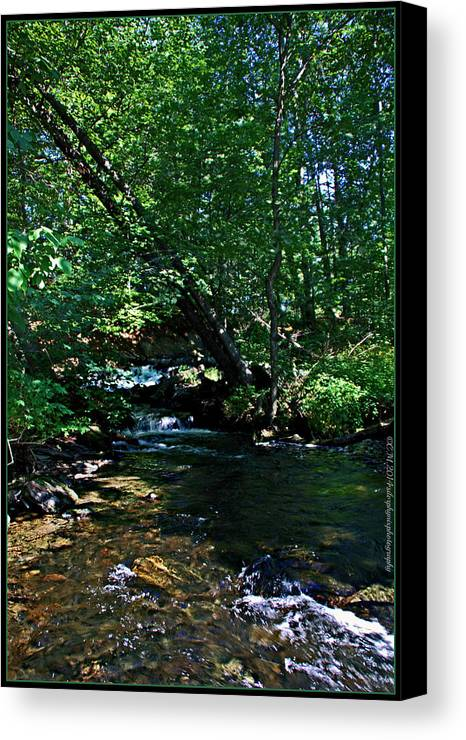 Creek Photography Canvas Print featuring the photograph Crooked Creek by Catherine Melvin